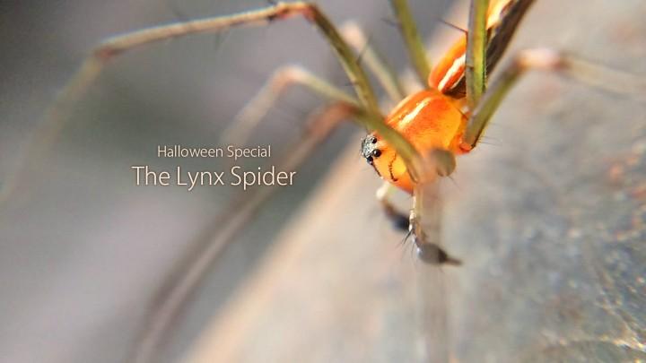 Halloween_Lynx2